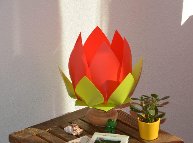 Lotus red - lemon