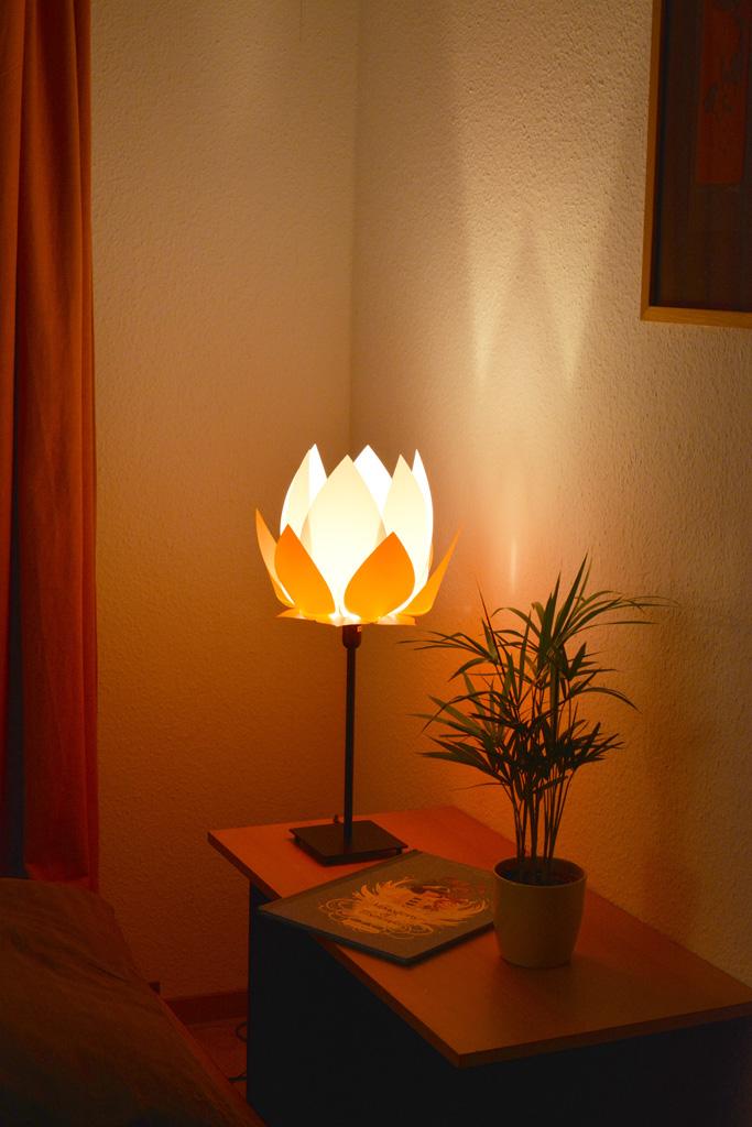 Lotus  white - orange